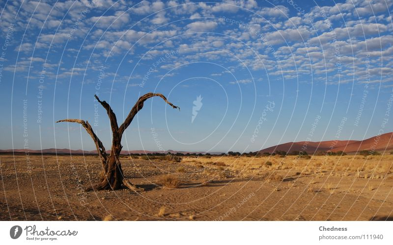 dead tree Tree Africa Clouds Scrap Badlands Dry Transience Death Desert Beach dune Thin