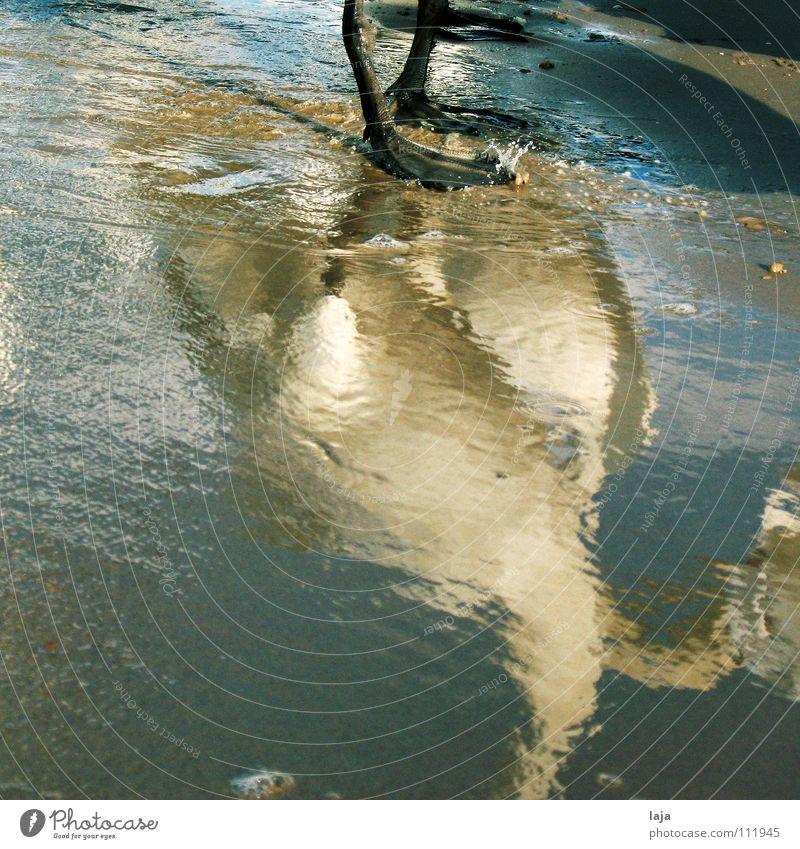Plitschplatsch Swan Animal Feather Bird Water Sand Beach Ocean Baltic Sea Mirror image Foam Conceited Reflection Animal foot Coast Beautiful