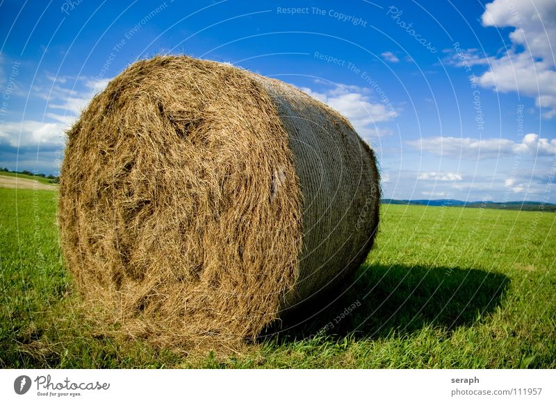Bale of Straw Hay Bale of straw Hay bale Coil Roll Field Meadow Sky Summer Agriculture Feed Fruit Grass Blade of grass Harvest import Grain Packaged Box up