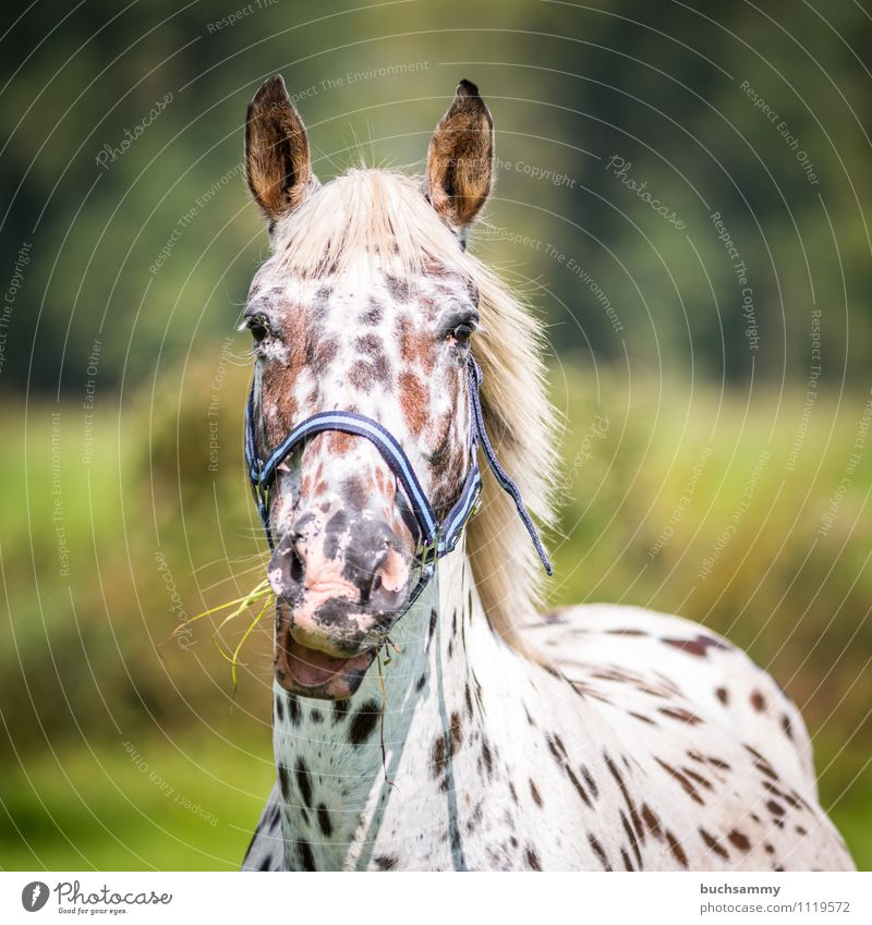 Hungry mare Animal Grass Pet Farm animal Horse 1 To feed Brown Green White Gray (horse) sunshine Mammal Ride Bridle Colour photo Exterior shot Day Sunlight