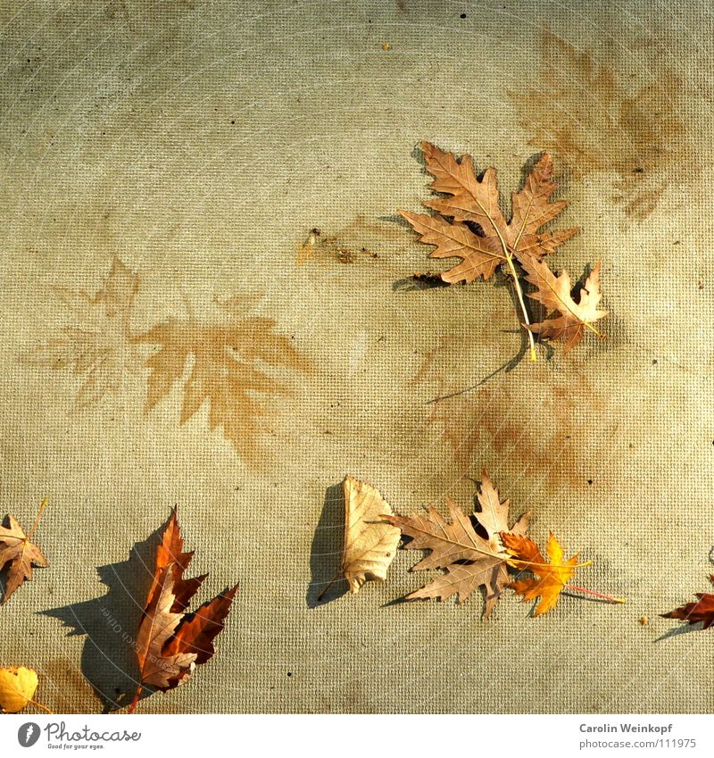 Leaf Autumn Concrete Tracks Mysterious Seasons Beautiful weather Mirror image November Puzzle Unclear December October September Autumnal Imprint