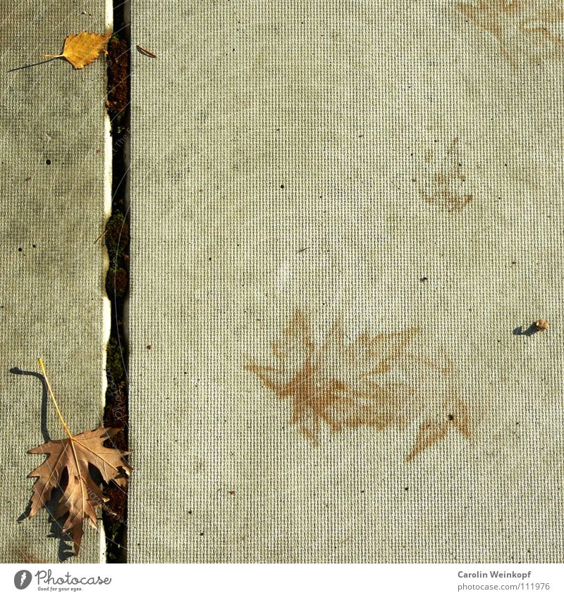 Leaf Loneliness Yellow Autumn Gray Line Brown Concrete Tracks Mysterious Seasons Beautiful weather Doomed Mirror image November Puzzle