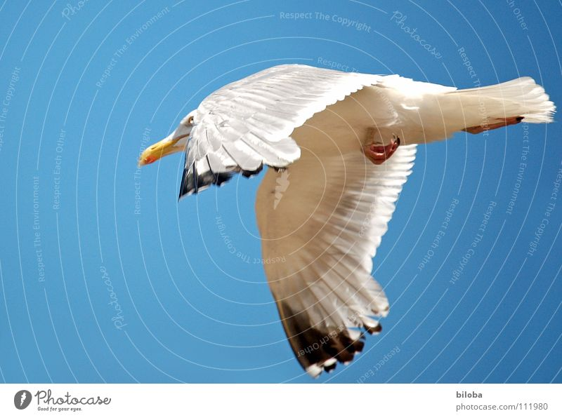 Get the fuck out of here! Seagull White Black Speed Escape Going Sea bird Bird Animal Poultry Infinity Beautiful Iron blue Deep Exterior shot Ocean Lake Belgium