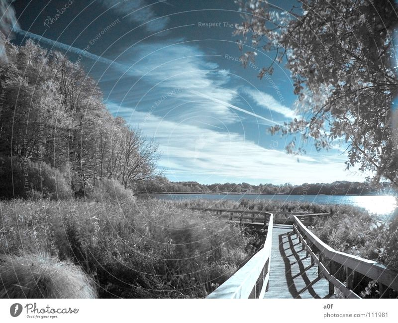 Sky Tree Forest Lanes & trails Lake Footbridge Photographic technology Infrared Infrared color White-blue