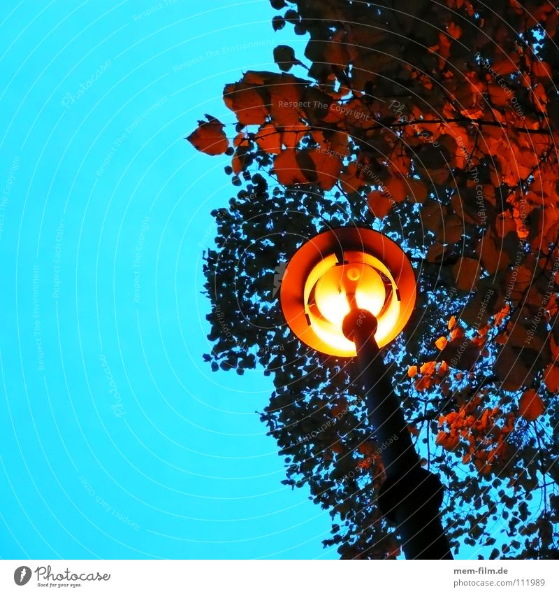 under the lantern Lantern Street lighting Night Sidewalk Light Leaf Autumn Yellow Electric bulb Twilight Lighting time change Energy industry Bright Sky Dusk