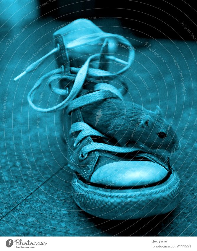 Mouse in shoe Interior shot Experimental Animal portrait Playing Clothing Footwear Sneakers Brash Crazy Sweet Blue Self-confident Cool (slang) Love of animals