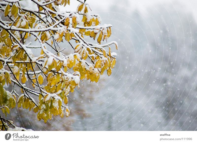 Nature Green Beautiful White Tree Leaf Calm Joy Winter Forest Black Cold Mountain Yellow Autumn Snow