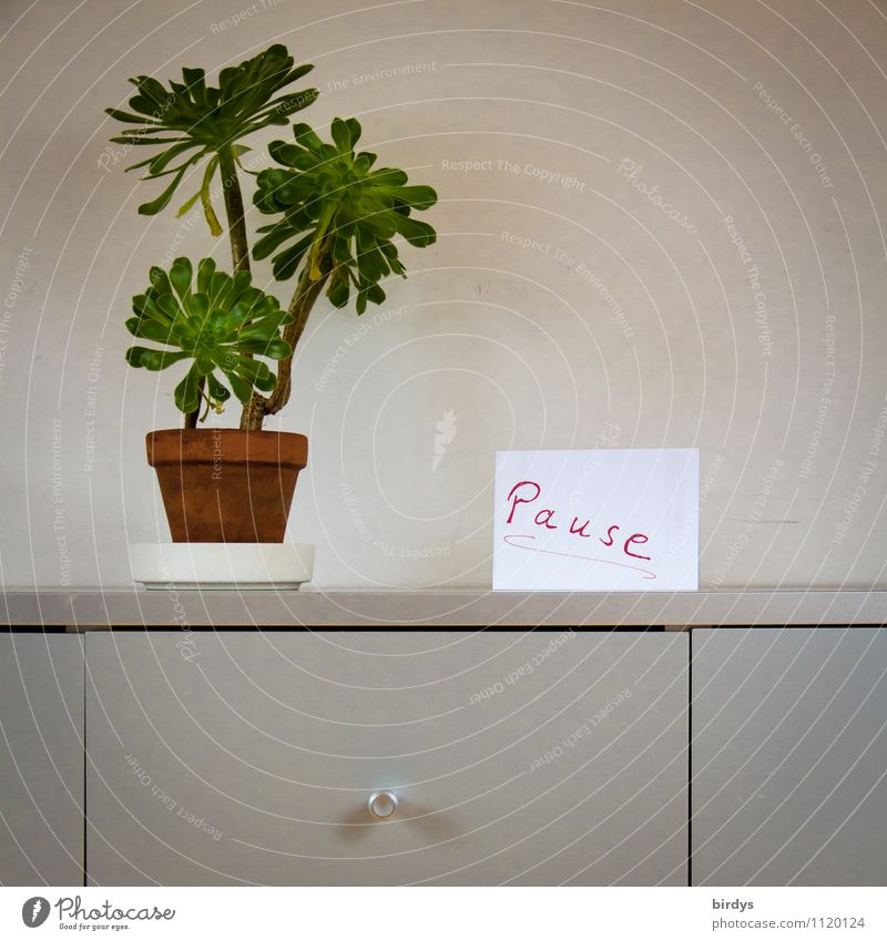 break, sign in an office. simple plant and filing cabinet Living or residing Interior design Decoration Office work Workplace Pot plant Paper Characters Signage