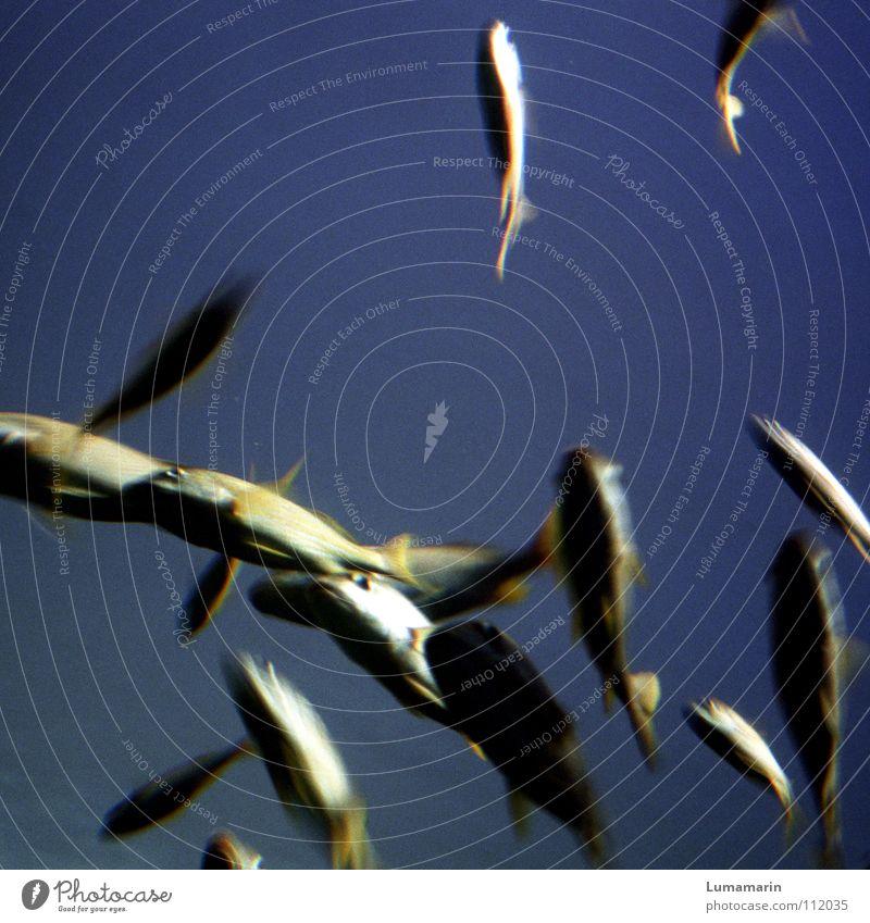 Water Beautiful Ocean Blue Life Movement Friendship Glittering Gold Speed Fish Multiple Broken Dive Sporting event