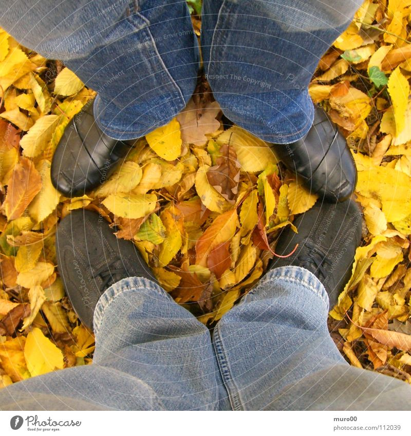 leaf legs Leaf Autumn Footwear Pants Yellow Ochre Brown Black Boots To go for a walk Woodground Leisure and hobbies Feet Legs Jeans Blue Orange geox Nature
