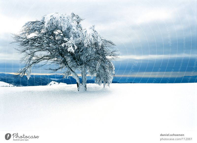 Christmas card 11 Black Forest White Deep snow Hiking Leisure and hobbies Vacation & Travel Jinxed Mystic Abstract Background picture Snowscape Loneliness
