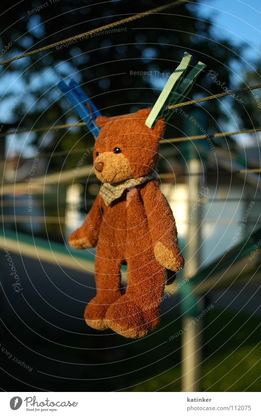 ...hang out... Teddy bear Clothesline Clothes peg Hang up Laundry Holder Obscure hung Bear