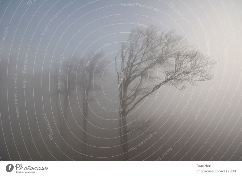 Tree Winter Forest Cold Autumn Rain Fog Mystic
