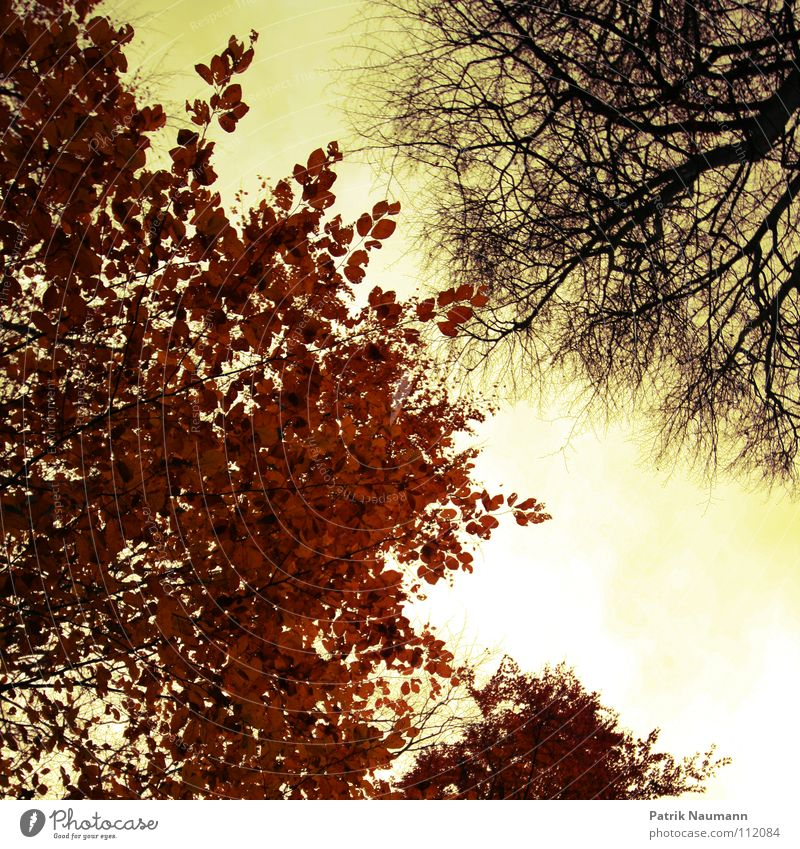 Sky Tree Red Leaf Yellow Colour Forest Autumn Wood Warmth Together Physics Branch Idyll Tree trunk