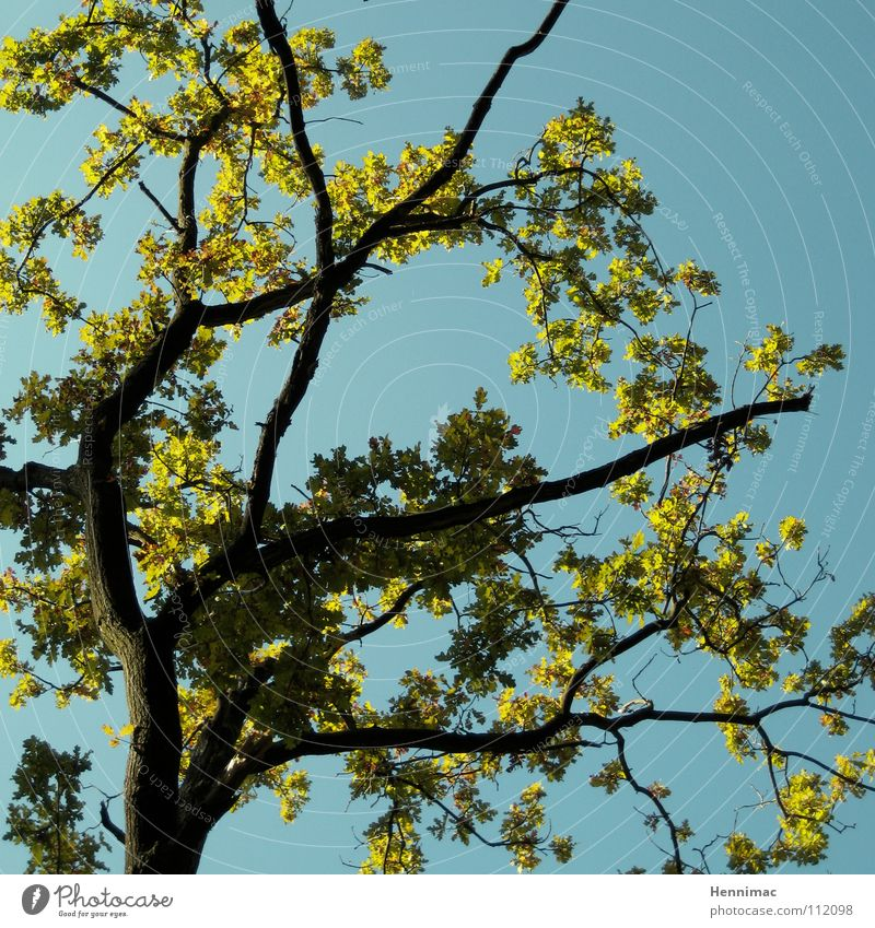 Sky Blue Green Tree Plant Leaf Life Spring New Branch Blossoming Tree trunk Bud Tree bark May April