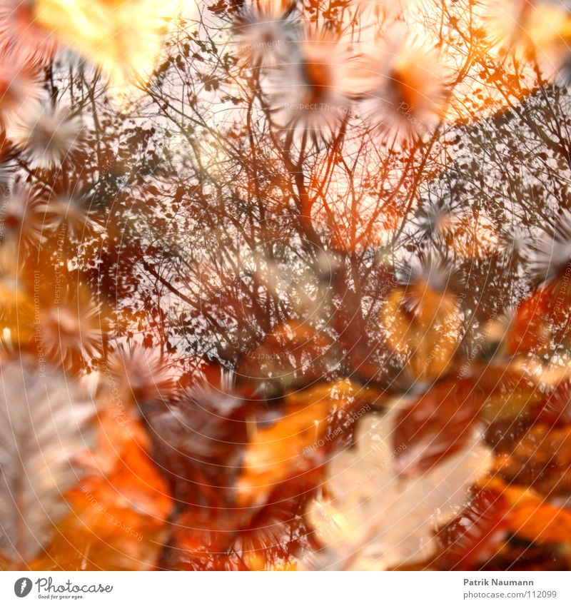 You can't see the tree for the leaves. Autumn Red Yellow Leaf Tree Physics Forest Multicoloured Wood flour Sky Puddle Heap Autumnal Orange Branch Warmth Like