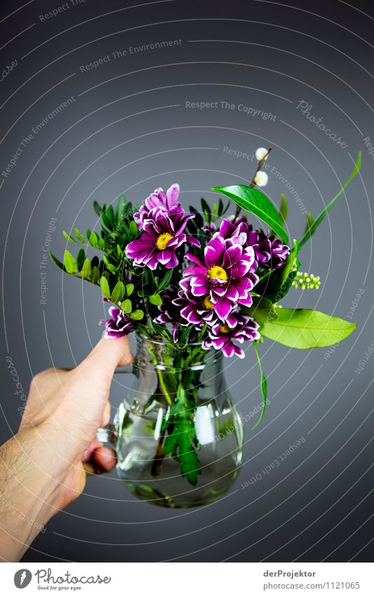 Nature Plant Beautiful Flower Hand Joy Emotions Love Style Happy Small Art Lifestyle Together Friendship Design