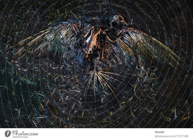Nature Old Calm Animal Dark Black Environment Death Bird Fear Gloomy Transience Sign Broken End Meditation