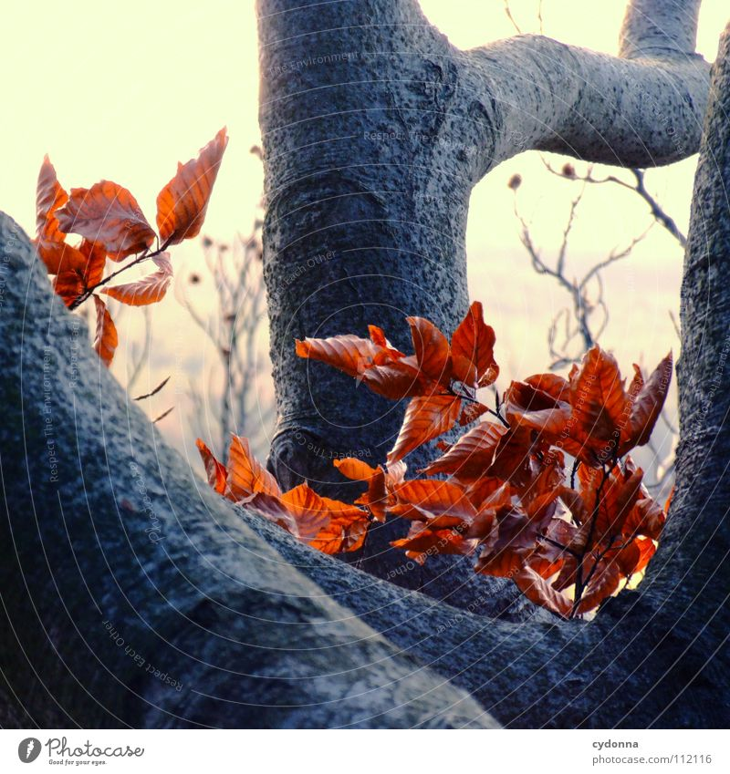Nature Old Tree Red Winter Leaf Colour Forest Cold Autumn Death Sadness Think Wind Grief Action
