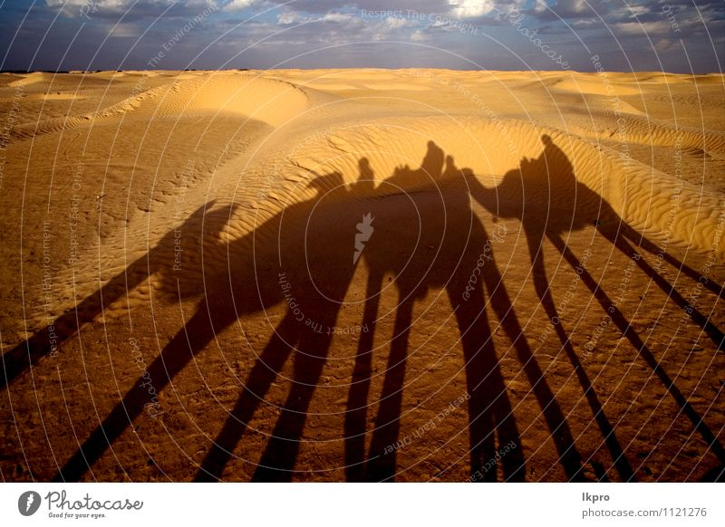 the sahara's desert Sand Sky Clouds Paw Brown Yellow Gray Green Red Black White douze gold Tunisia Sahara camel Dune curved people arcuated circle Shadow