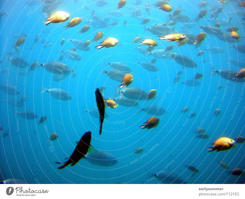 Blue Vacation & Travel Water Summer Sun Ocean Animal Beach Dream Island Wet Trip Fish Dive Deep Turquoise