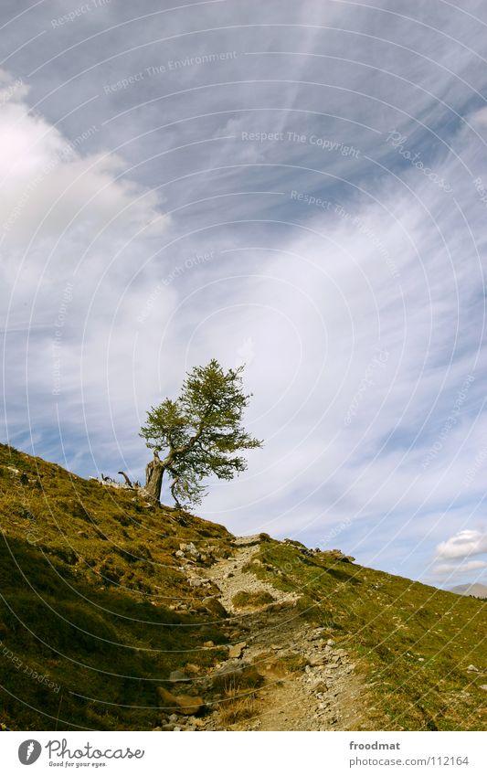 Nature Sky Tree Loneliness Mountain Lanes & trails Switzerland Alps Idyll