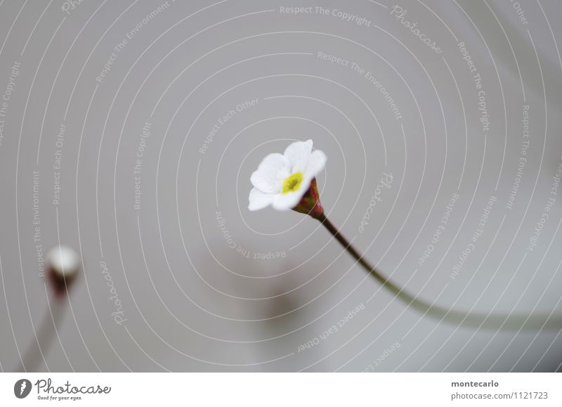 Nature Plant White Flower Leaf Environment Spring Blossom Natural Small Gray Wild Fresh Authentic Simple Cute