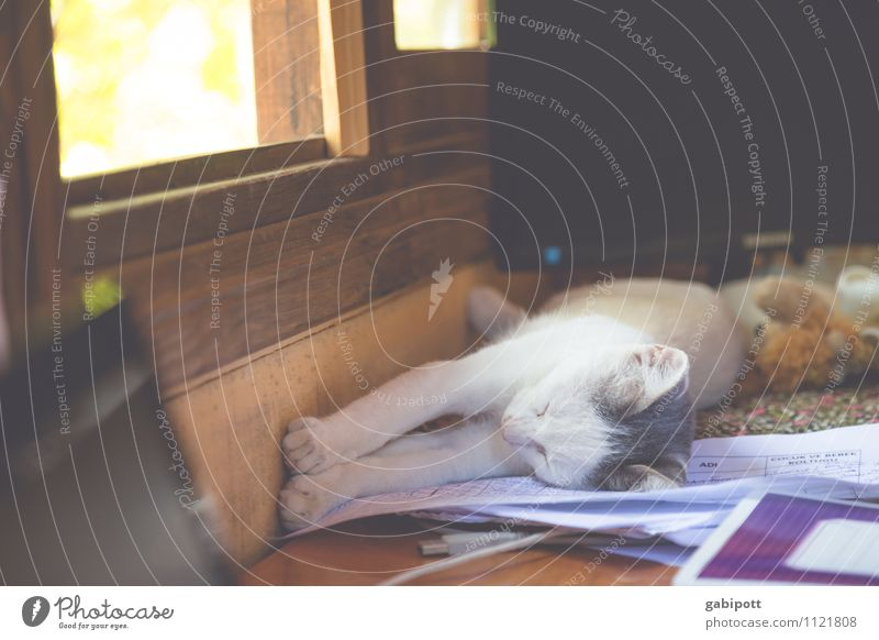 Cat Nature Relaxation Calm Animal Life Happy Contentment Idyll Joie de vivre (Vitality) Sleep Break Serene Pet Ease Cozy