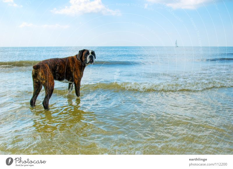 Water Sky Ocean Blue Summer Beach Vacation & Travel Clouds Loneliness Far-off places Dog Sadness Lake Sand Brown Waves