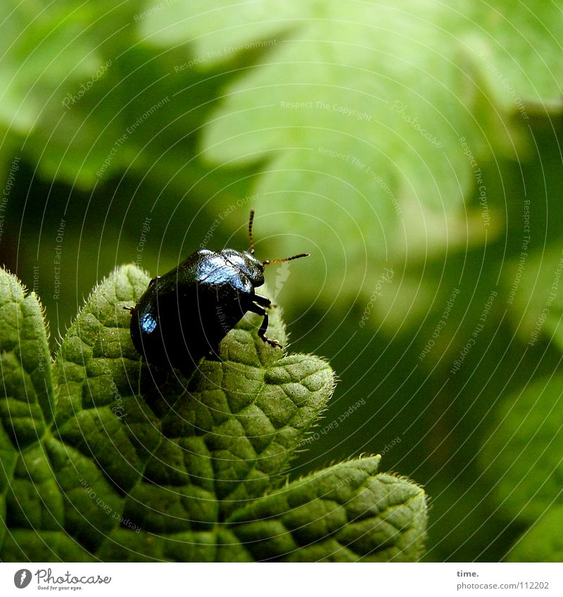 Nature Green Blue Leaf Garden Power Force Climbing To hold on Concentrate Weight Hang Effort Flexible Mountaineering