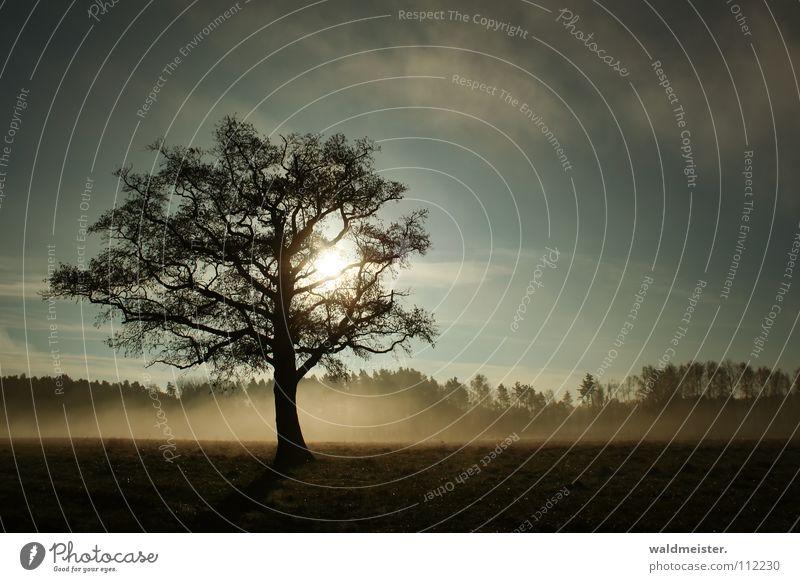 Tree in the fog Fog Meadow Romance Calm Longing Loneliness Sun Sky Landscape Nature Müritz National Park