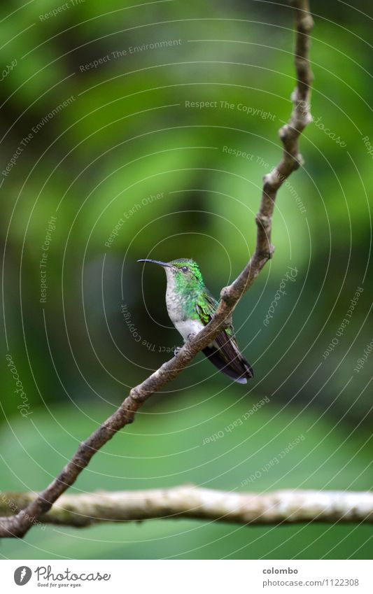Nature Vacation & Travel Green Sun Animal Environment Life Small Flying Bird Air Elegant Power Happiness Wing Climate
