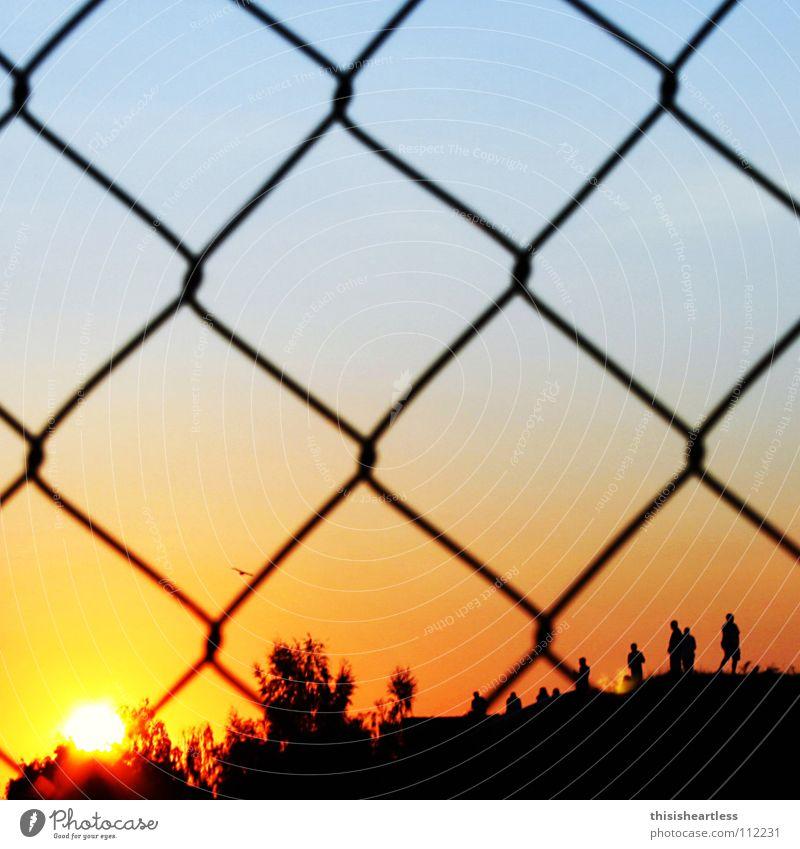 zaungast Summer Sun Good mood Sunset Romance Contentment Fence Wire netting Remote Loop Hill Human being Bird Tree Red Black Joy