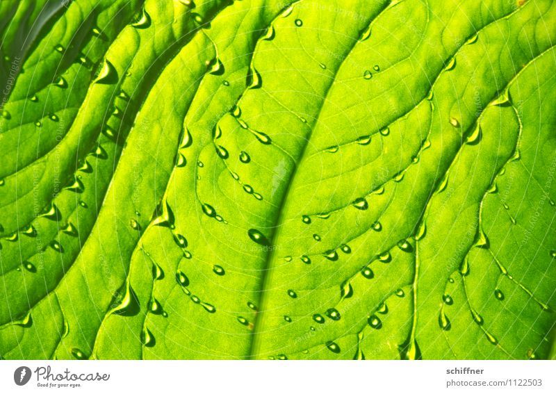 refreshment Nature Plant Water Drops of water Tree Foliage plant Exotic Green Fresh Wellness Damp Wetlands Leaf green Rachis Leaf filament Refreshment Dripping