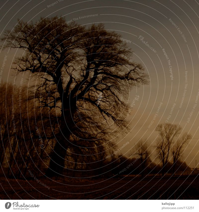 Tree Winter Joy Meadow Cold Earth Horizon Earth Field Fog Wild animal Drops of water Floor covering Ground Frost Reading