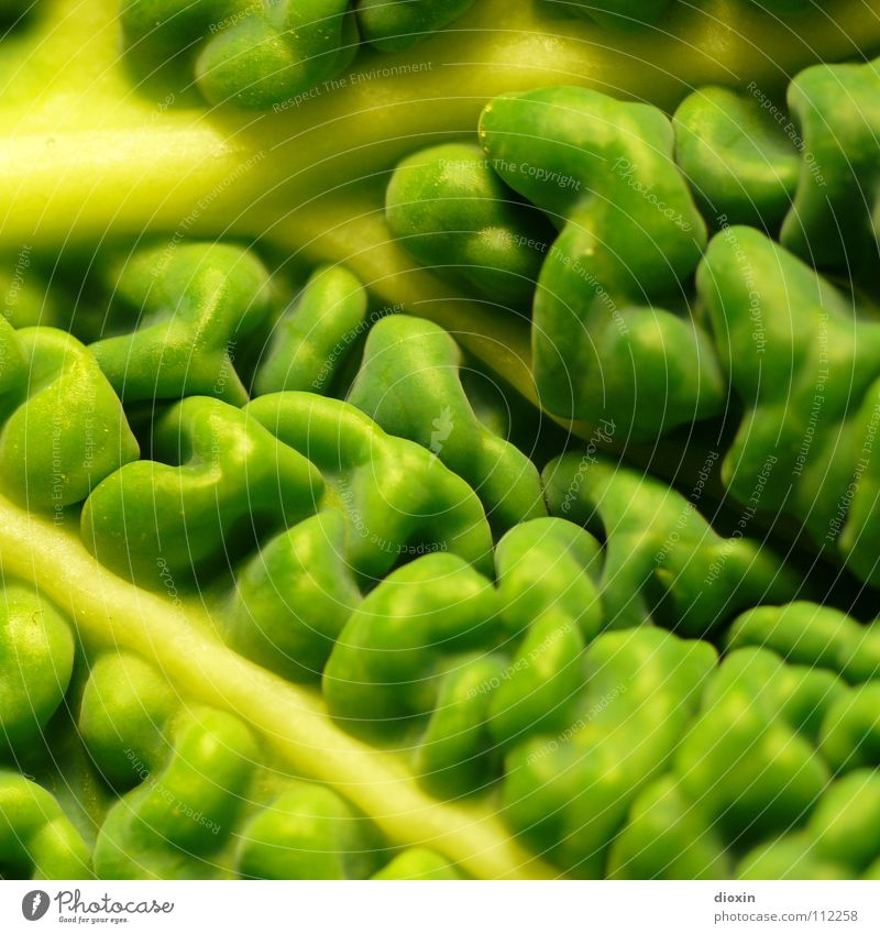 Brassica Oleracea Colour photo Close-up Detail Macro (Extreme close-up) Pattern Structures and shapes Deserted Food Vegetable Nutrition Organic produce