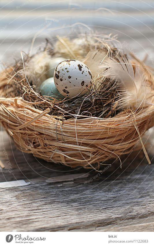 Nature Joy Life Spring Natural Lifestyle Wood Happy Feasts & Celebrations Bird Living or residing Decoration Beginning Study Joie de vivre (Vitality) Sign