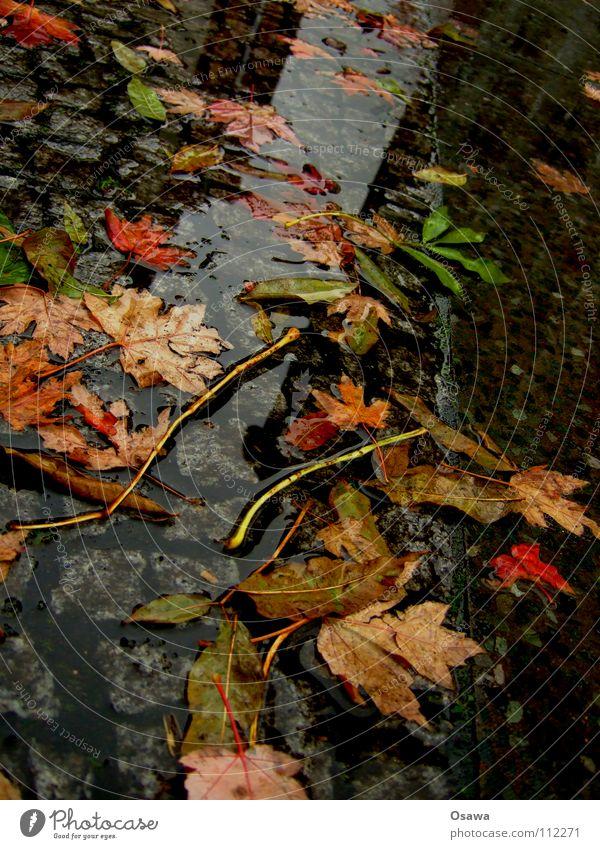 Worst Autumn ever Leaf Puddle Wet Cold Rain Bad weather Boredom