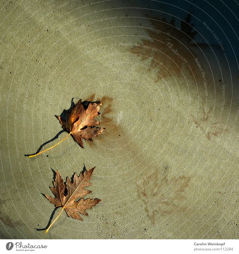 Leaf Autumn Seasons Progress November Humor December October September Autumnal Imprint Irony Imitate