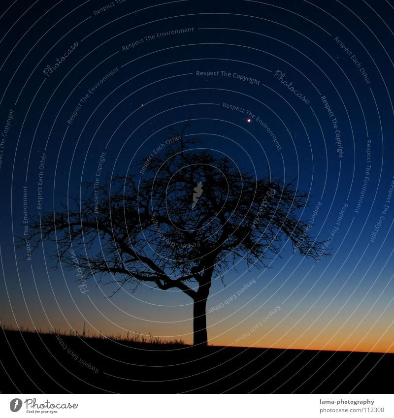 Sky Tree Leaf Loneliness Winter Meadow Mountain Autumn Grass Dream Moody Field Stars Places Romance Individual