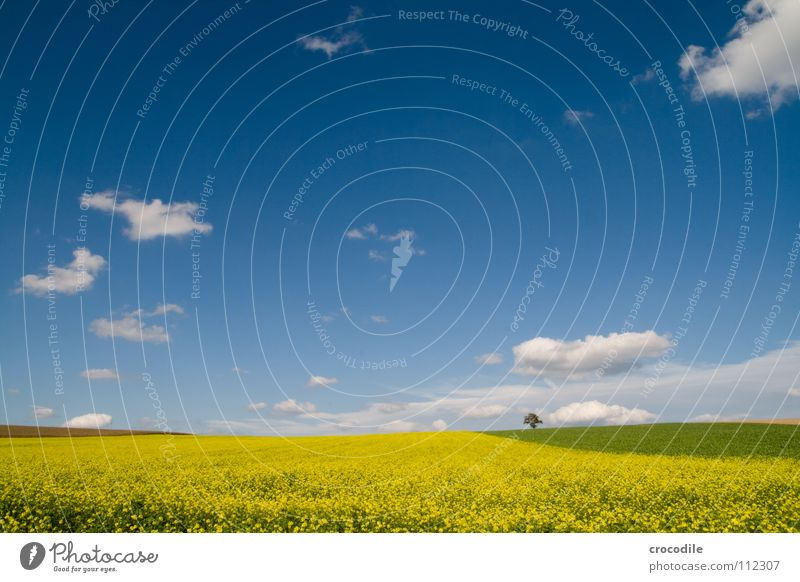 Shoot, rap again. Canola Field Spring Ecological Diesel Carbon dioxide Climate change Yellow Stripe Stalk Oxygen Panorama (View) Clouds Bavaria Rural Leaf green