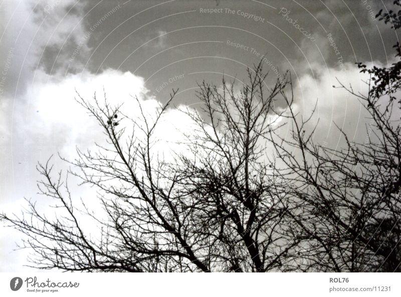 Sky Tree Growth Branch Twig