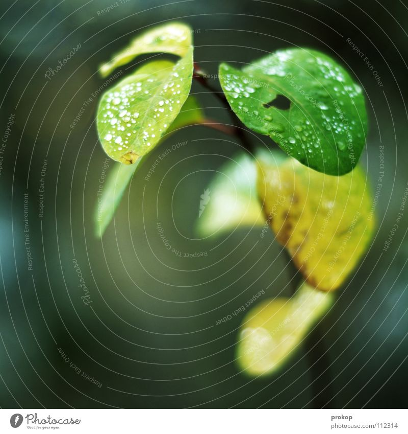 Plant Beautiful Green Flower Leaf Winter Cold Autumn Drops of water Branch Wet Soft Rope Peace Delicate Damp