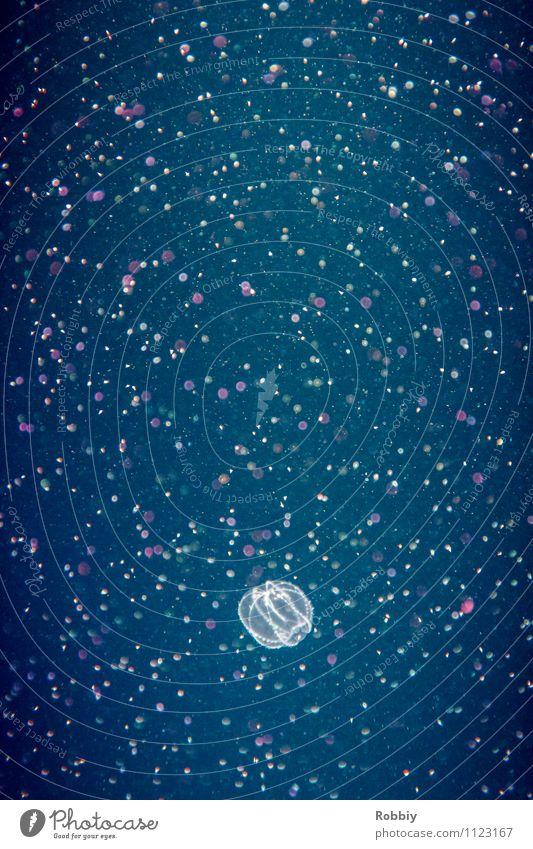 Nature Water Ocean Animal Life Natural Swimming & Bathing Illuminate Point Transparent Environmental protection Exotic Hover Aquarium Maritime Jellyfish