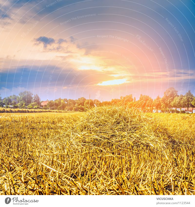 Straw field and sunset sky Lifestyle Design Summer Sun Agriculture Forestry Nature Sky Sunrise Sunset Sunlight Autumn Beautiful weather Meadow Field Yellow