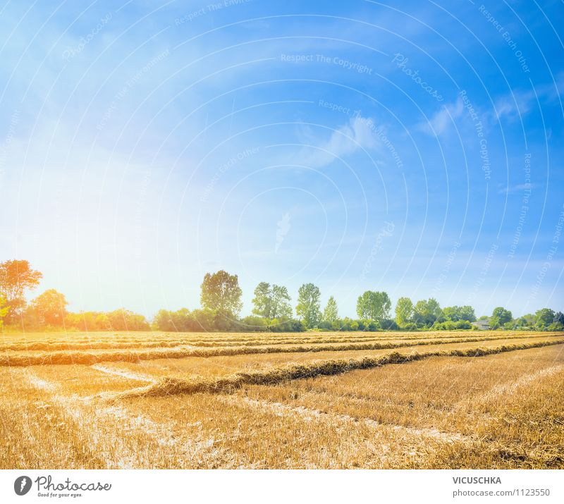 Sky Nature Summer Sun Tree Landscape Yellow Dye Autumn Background picture Lifestyle Field Design Beautiful weather Agriculture Cloudless sky