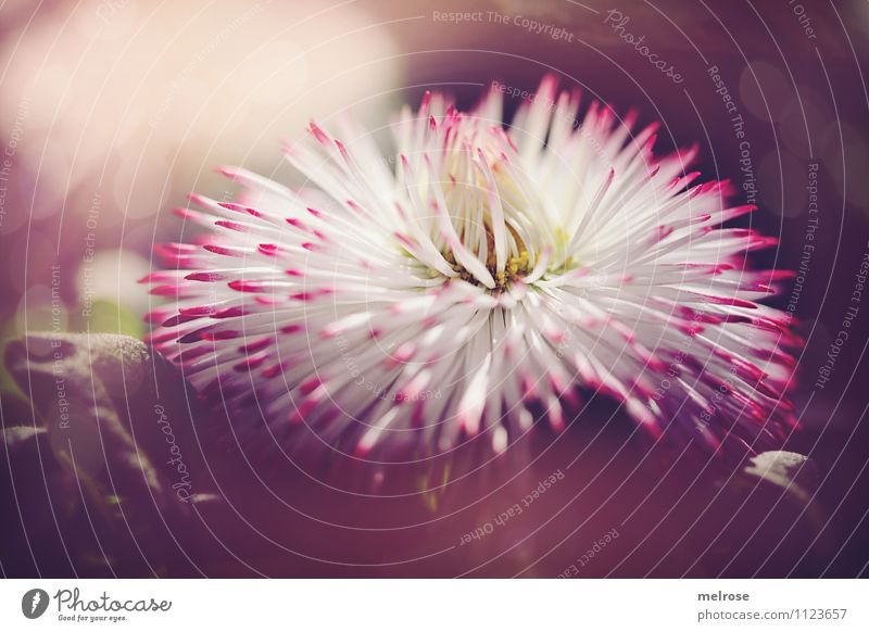Nature Plant Beautiful White Summer Relaxation Flower Leaf Life Blossom Grass Style Exceptional Brown Pink Dream