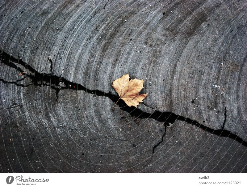City Plant Leaf Calm Dark Street Sadness Death Lie Gloomy Transience Hope Mysterious Grief Dry Asphalt