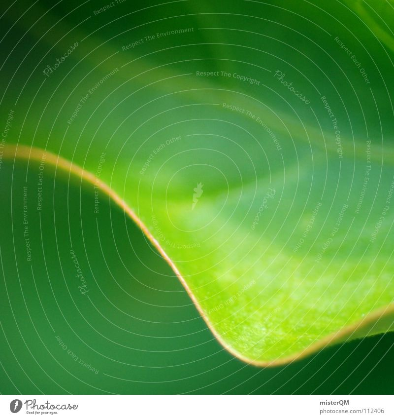 turn over a new leaf Leaf Green Nature Calm Dream Beautiful Beginning Relaxation Perfect Simplistic Blur Plant Meadow Bushes Photosynthesis Vessel Provision