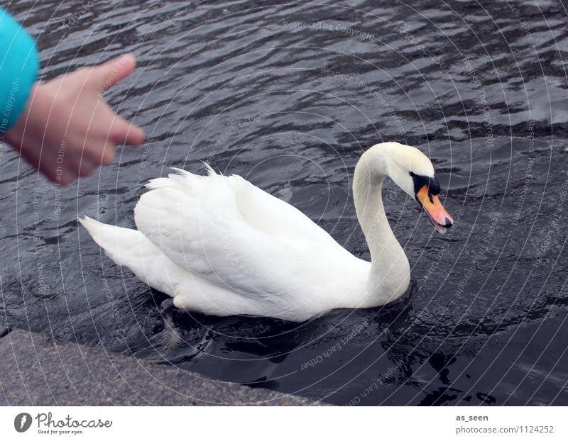Feed swan Parenting Animal Swan Animal face Wing Zoo 1 To feed Feeding Swimming & Bathing Esthetic Authentic Gray Orange Turquoise White Joy Love of animals
